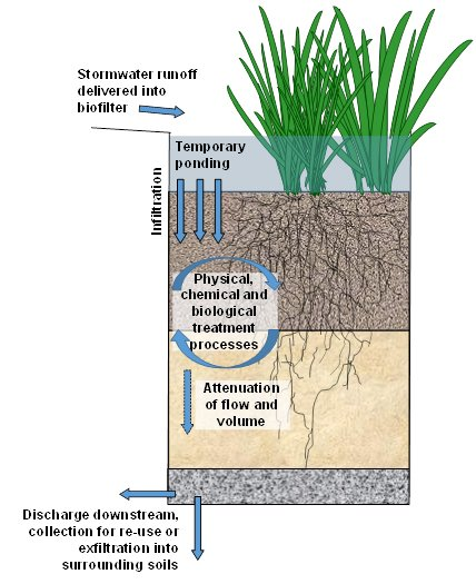Figure 1: Key principles of stormwater biofiltration (Source: CRC for Water Sensitive Cities, 2015)