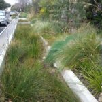 Randolph Avenue, Fullarton raingarden- after completion