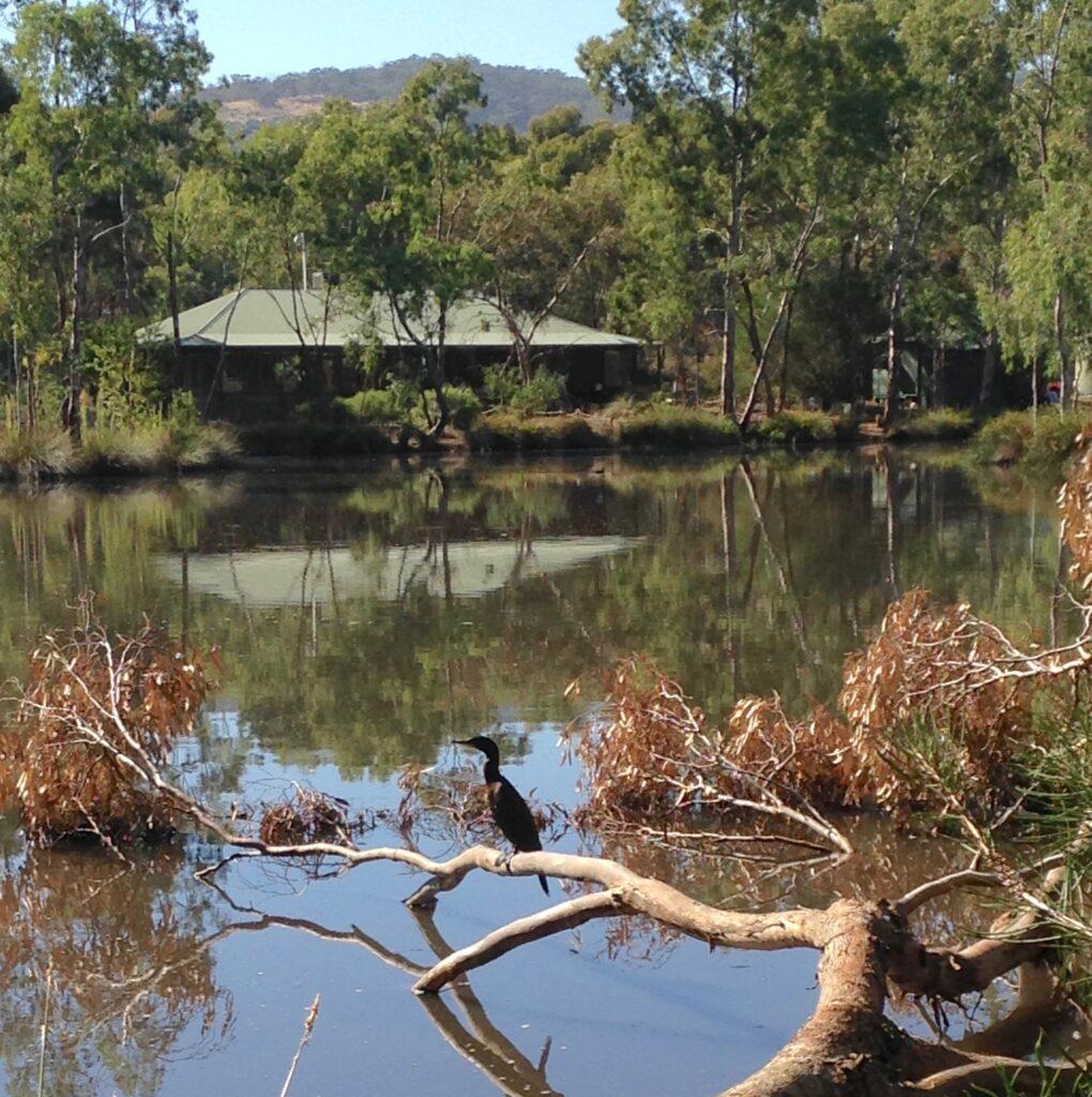 water sensitive saurrbrae wetland  netherby