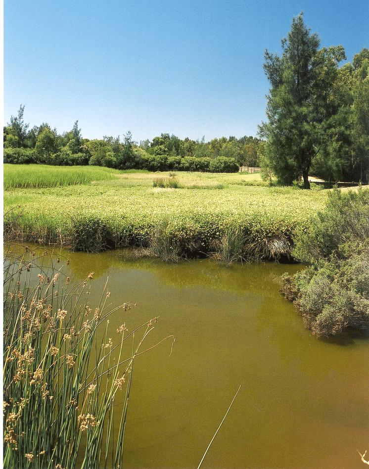 water sensitive sathe paddocks wetlands  pooraka