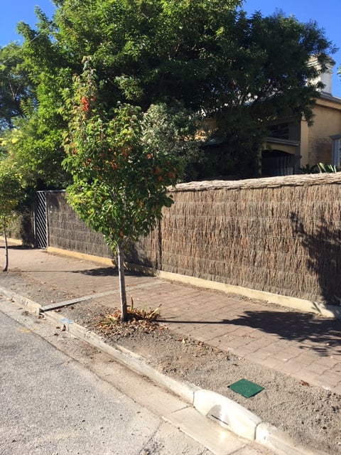 water sensitive sabristol street treenet inlets