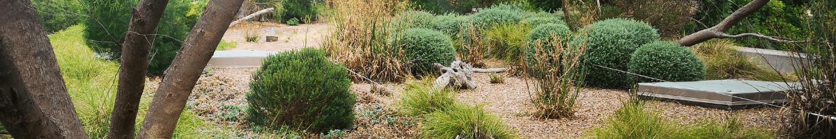 Adelaide Zoo - green roof. Image: Water Sensitive SA