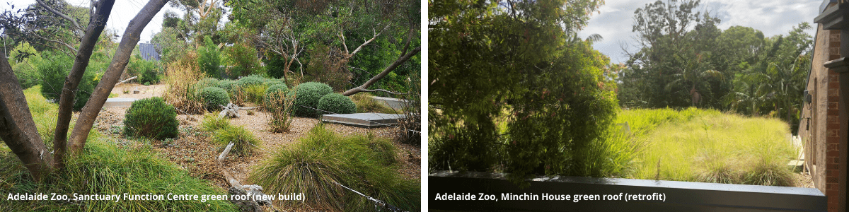 Green roofs - Adelaide Zoo, Sancutary Function Centre and Minchin House. Images: Water Sensitive SA
