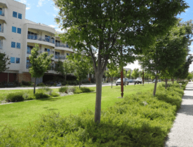 Case studies - Major infill greenfield developments