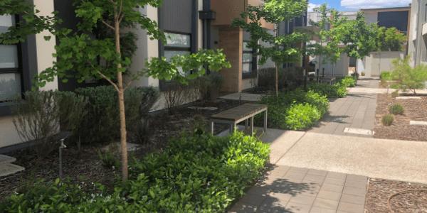 Marden Connect, 1 and 3 Alexander Lane central garden. Image: Water Sensitive SA