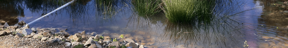 Unity Park Wetlands, Salisbury. Image: Water Sensitive SA
